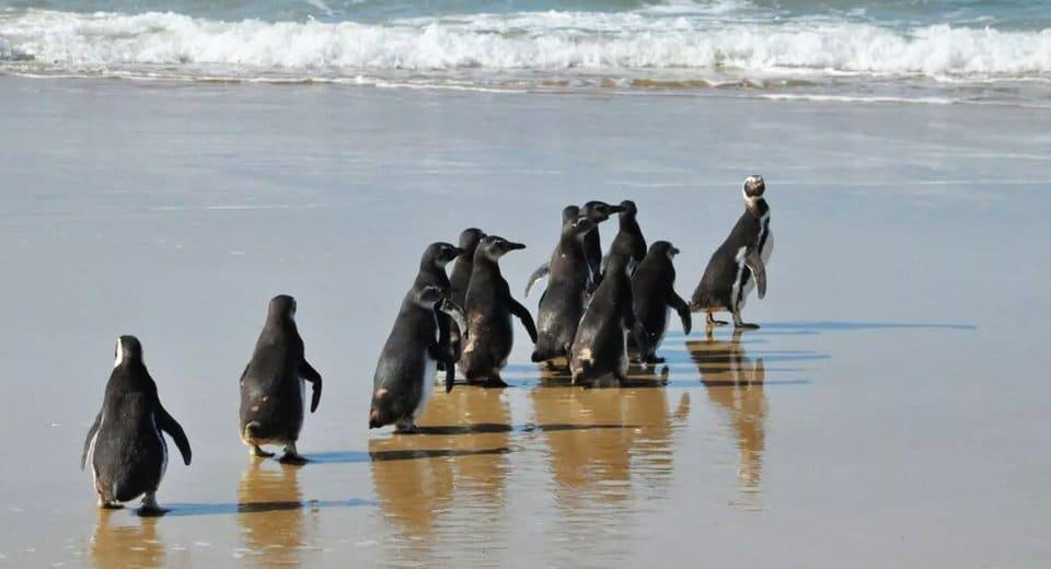 pinguins em Florianópolis