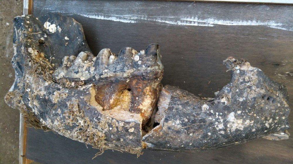 Fóssil encontrado em Santa Catarina