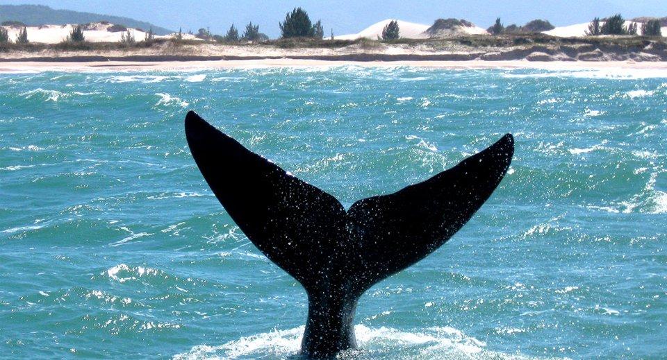 baleia em santa catarina
