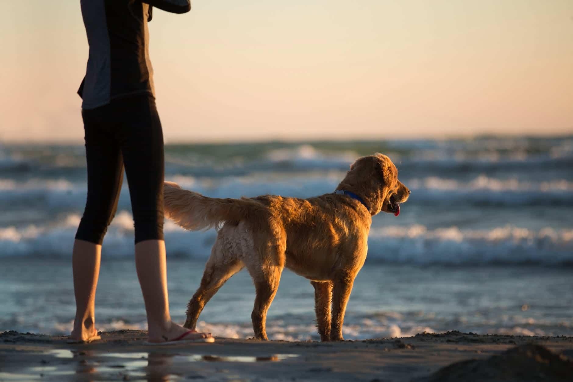 praia para cachorro em florianópolis