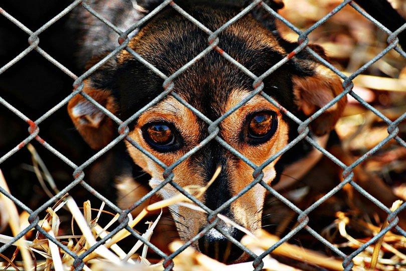 Lei de Florianópolis proibe cachorro acorrentado