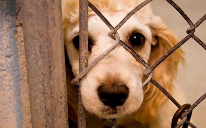 Saiba como denunciar maus tratos a animais em Florianópolis