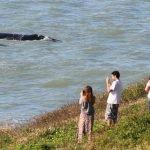 Observação de baleia franca em Santa catarina