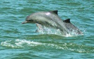 golfinhos em florianópolis